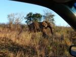 Elephant at Hluhluwe by photojournalist Wanda Hennig
