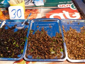 Bugs to chew on in Thailand.