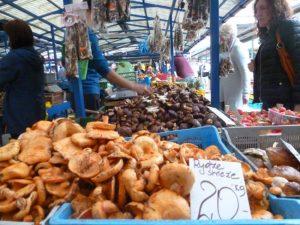 Foraged mushrooms Stary Kleparz