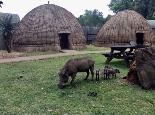 The Mlilwane camp.